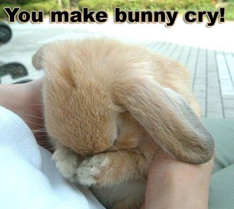 you-make-emotional-support-bunny-cry-b