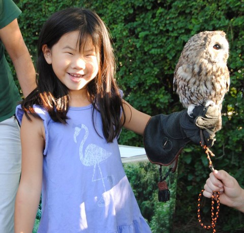 First, there's NO WAY I'm going to let you take up hawking, young lady.  Second, that's not a hawk, THAT'S AN OWL.  Don't you know ANYTHING?