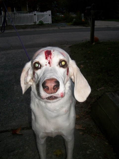 Zombie Dog